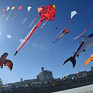 Festival of the Winds, Bondi Beach by andreisky