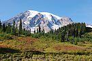 Mt. Rainier: Alpine Meadow by John Schneider