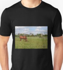 Quarter Horse Grazing T-Shirt
