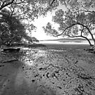 Mangroves by Geoff Smith