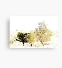 Trees growing in the Negev Desert. High key  Canvas Print