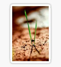 Grass blades grow out of the ground in a harsh environment  Sticker