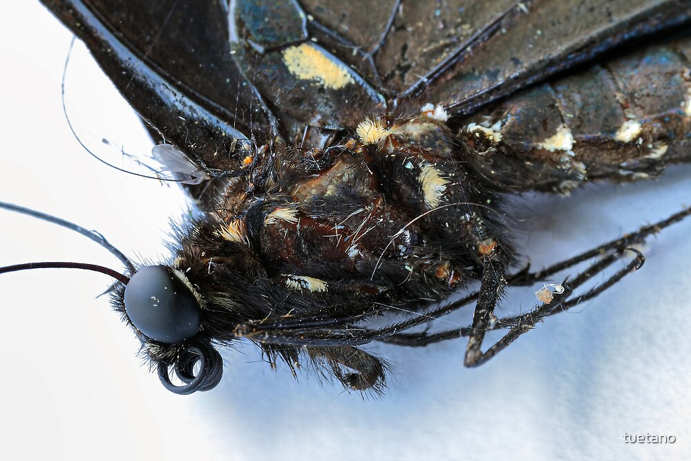 bug wars 17 by tuetano