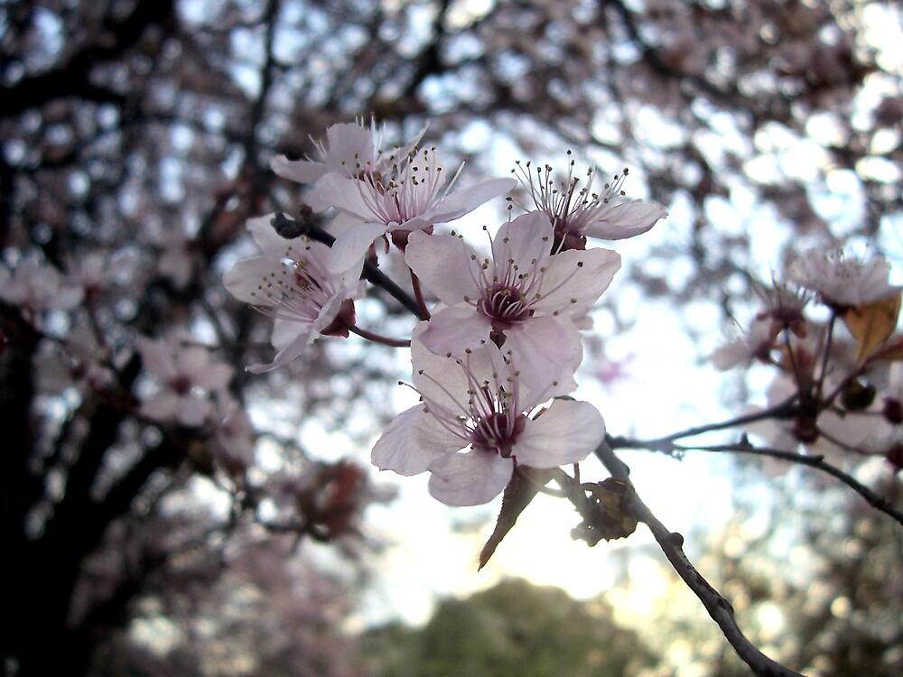 The plum II by crystalflowers