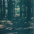 «El bosque» de Marina Demidova