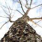 tree in winter by Lindsay Layton