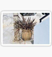 Vase of plants in Greece  Sticker