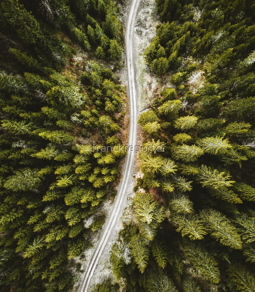 road through the pines by franckreporter