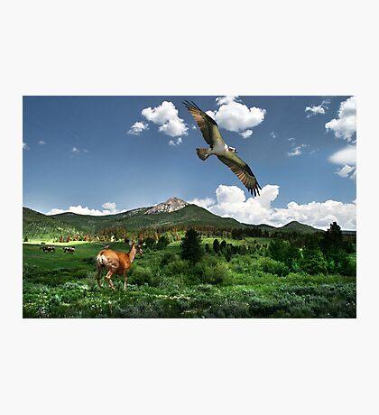 Watching Wilderness Photographic Print