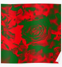 Deep Red Damask Rose  Poster