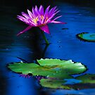 Lillies in the Pond by Franklin Lindsey