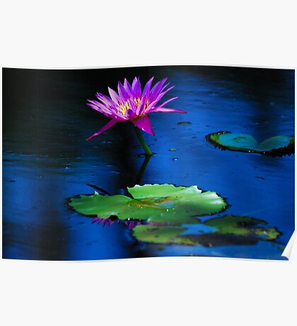 Lillies in the Pond Poster