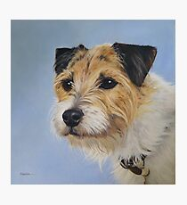 Adorable Parson Russell terrier! Photographic Print