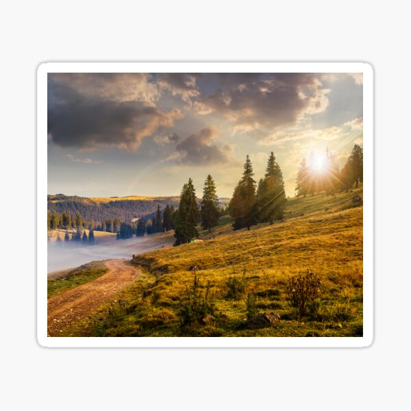 hillside meadow with forest in mountain at sunset Sticker