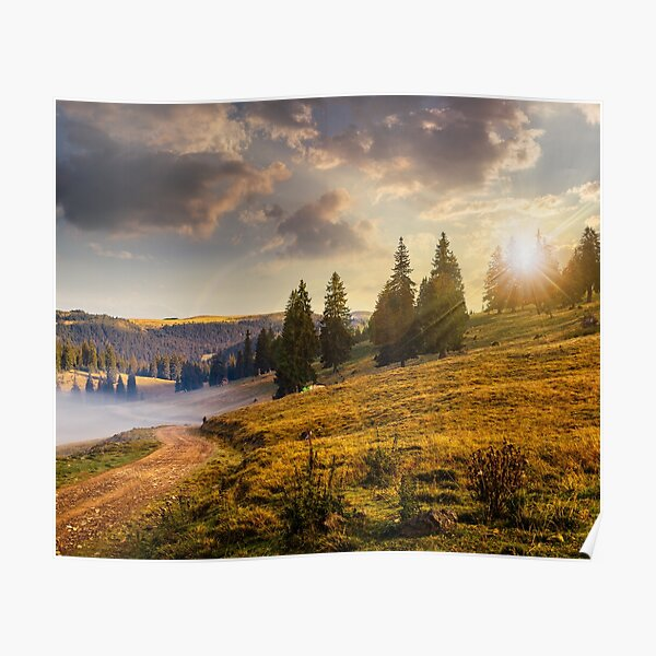 hillside meadow with forest in mountain at sunset Poster