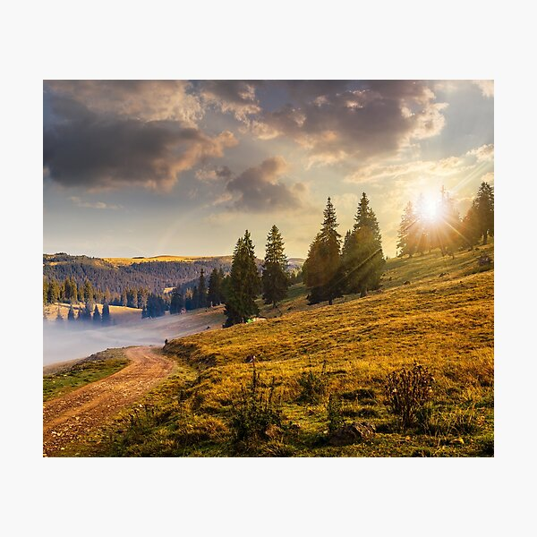 hillside meadow with forest in mountain at sunset Photographic Print