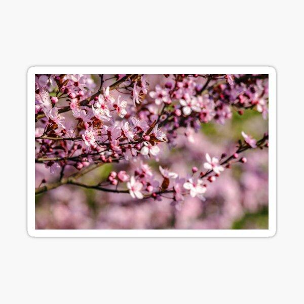 flowers of apple tree on a blur background Sticker