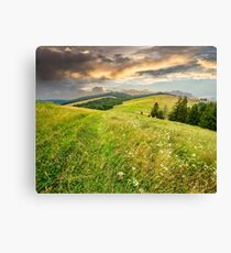 large meadow with herbs,  trees in mountain area Canvas Print