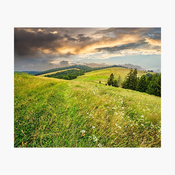 large meadow with herbs,  trees in mountain area Photographic Print