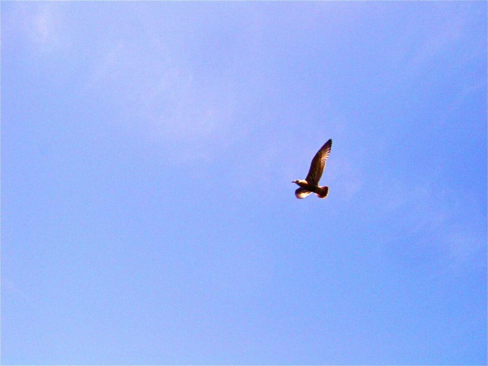 freedom by kotab