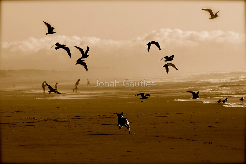 The Birds! by Jonah Gautier