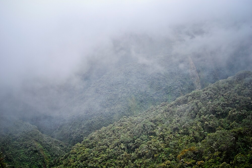 Yungas by chazthomson