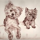 Two Yorkis - Yorkshire Terrier by Nicole Zeug