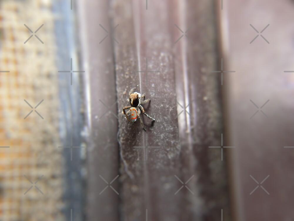 A *really* Teensy Weensy Spider by Sandra Chung