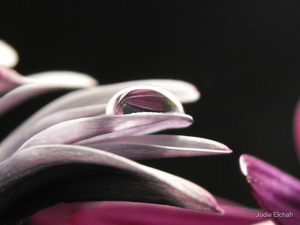 Baby Soft Pink Petals by Jodie Elchah