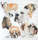 English Bulldog Second Time by BarbBarcikKeith