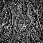 Buddha's tree in Ayutthaya by QuintaVale