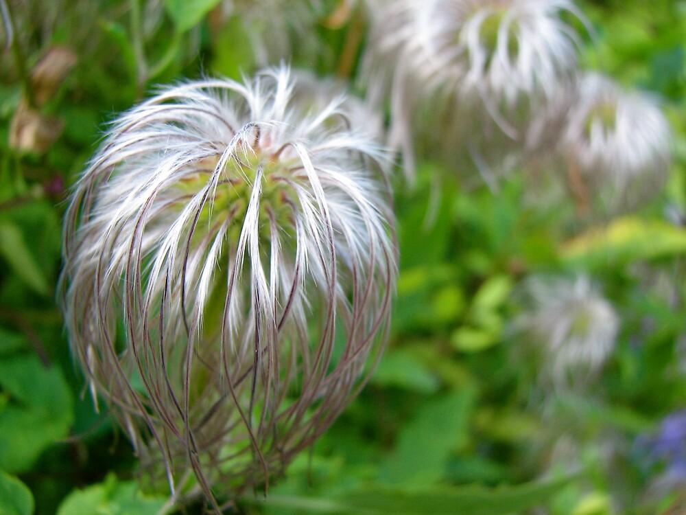 """hair"" flowers by Alison Johnson"