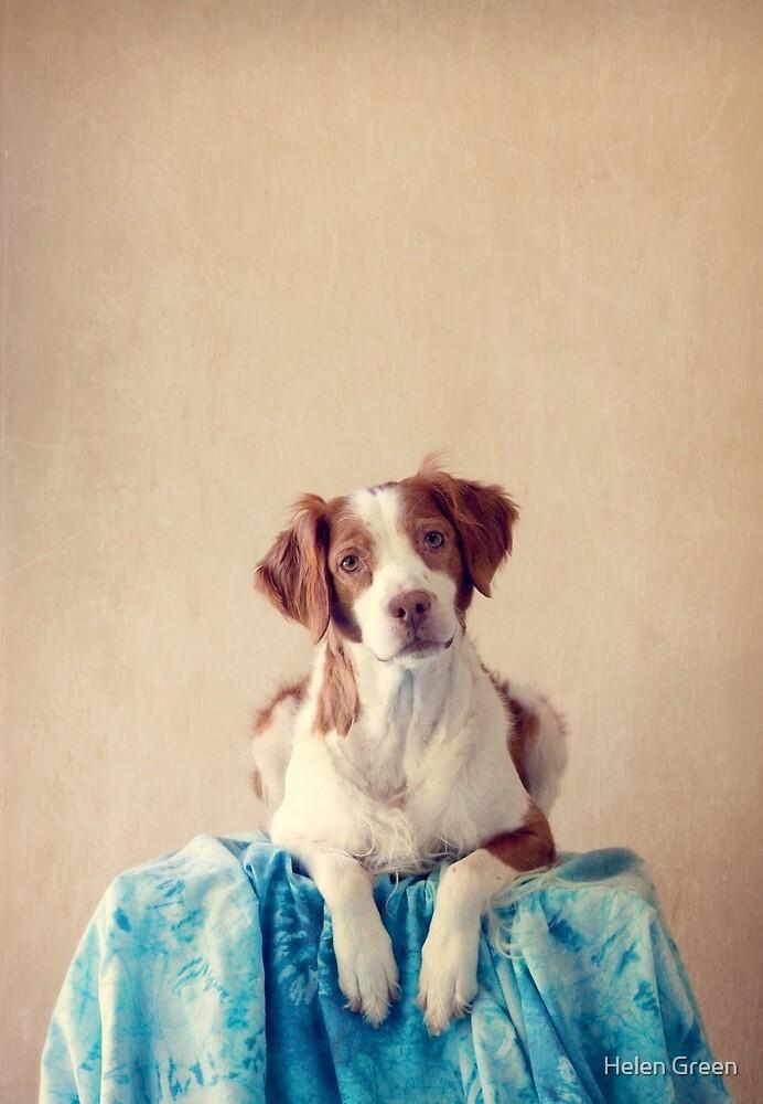 Chazer Sitting Pretty by Dog Shop