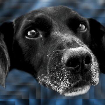 Dog v3.2f by GeorgeSears