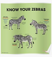 Know You Zebras Poster