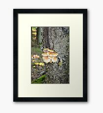 Scaly Cap Mushrooms Framed Print