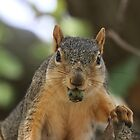 Being nuts isn't a bad thing by IowaShots
