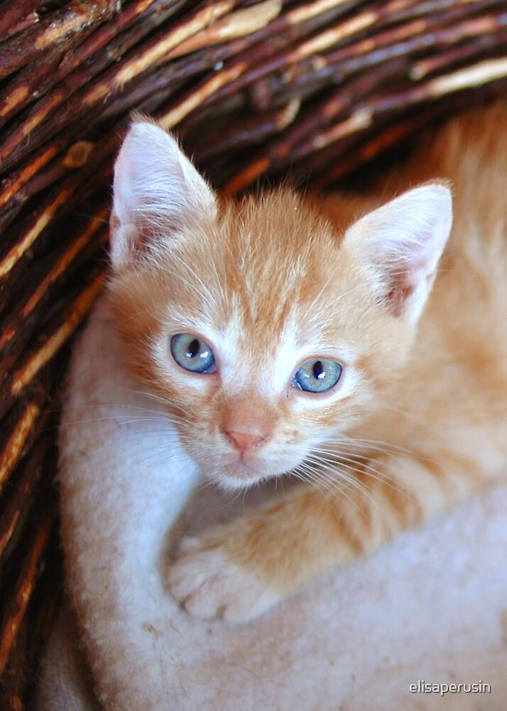 blu eyes by elisaperusin