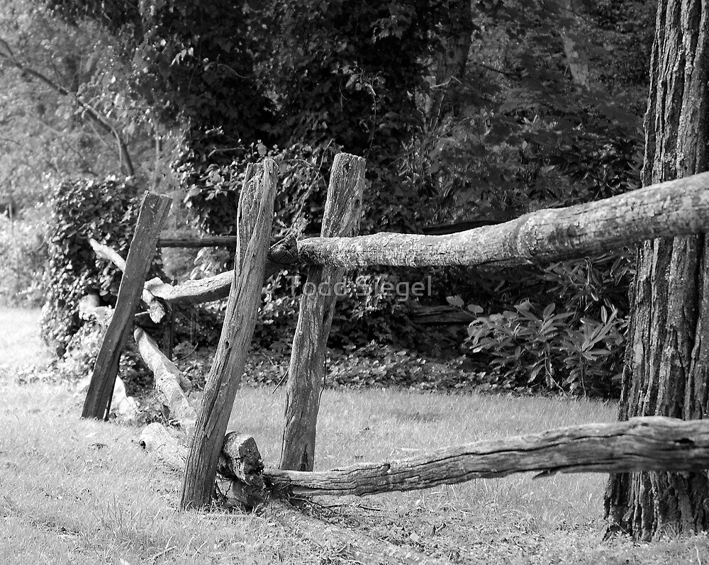 Old fence by Todd Siegel