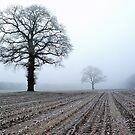 Old oak-trees in winter morning mist by jchanders
