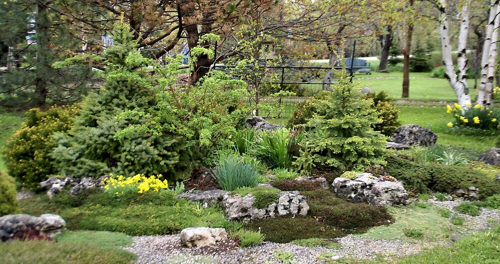 Rock Garden Display by pinnafore