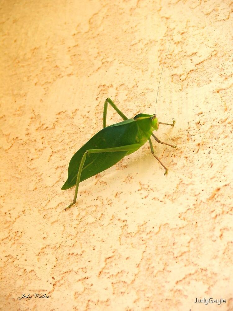 Green Creature by Judy Gayle Waller
