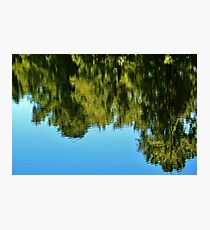 Reflections Of Nature Photographic Print
