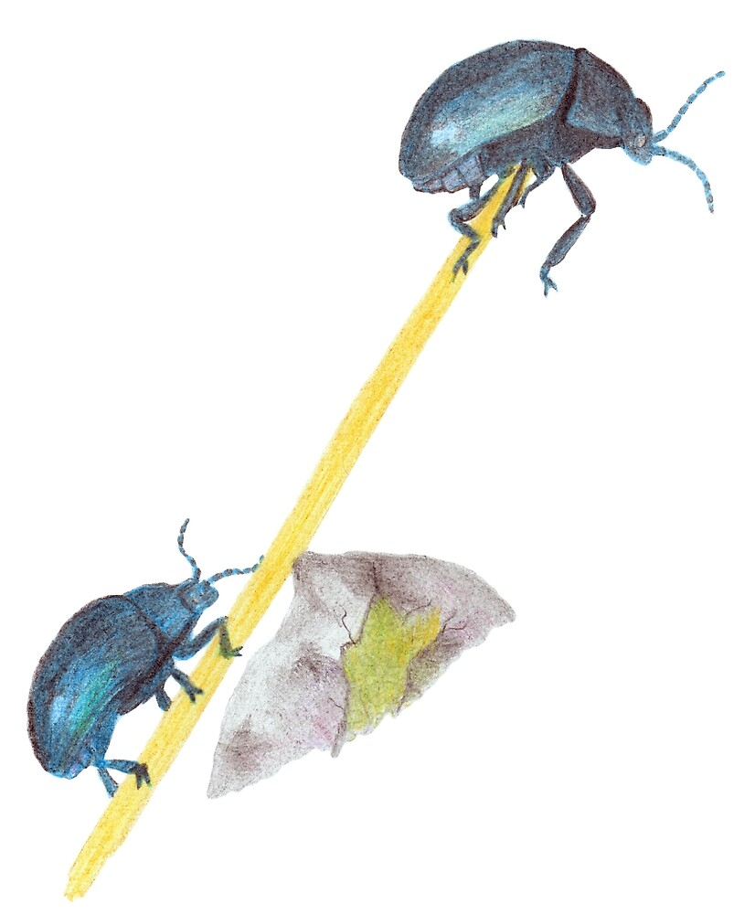 Balancing Beetles by Linda Ursin