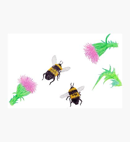 Bumblebees and Thistles Photographic Print