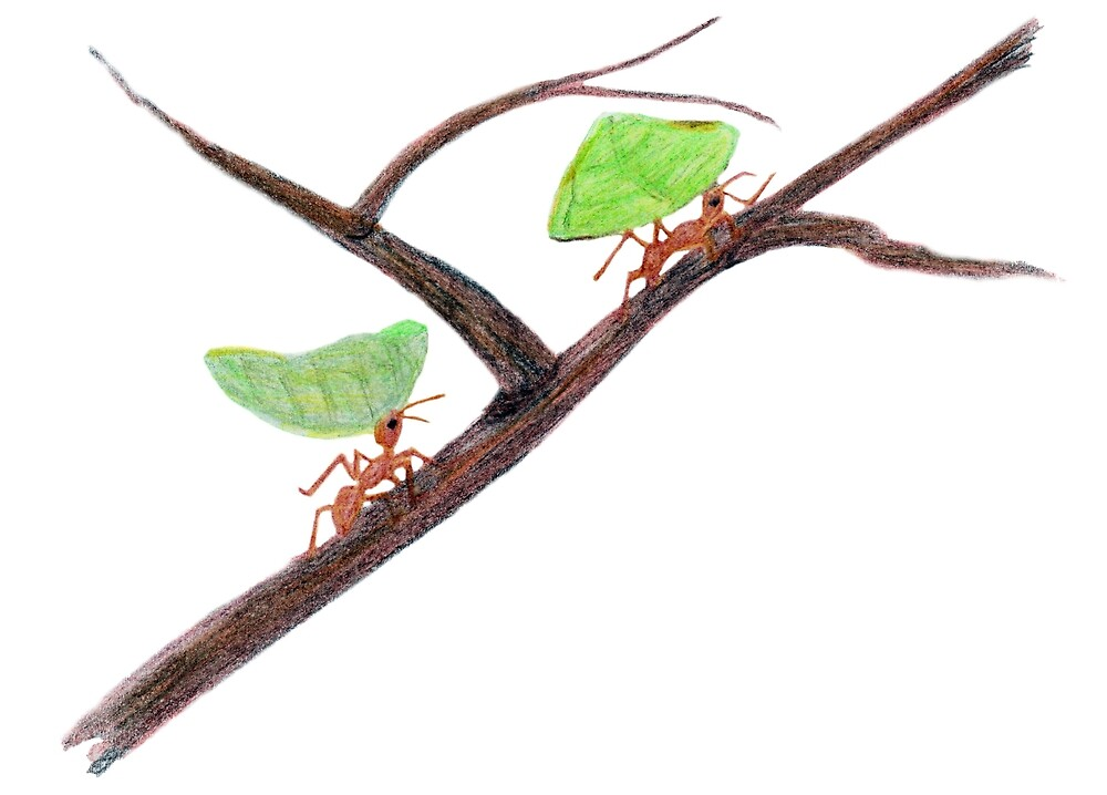Weaver Ants going home by Linda Ursin