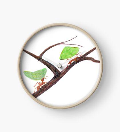 Weaver Ants going home Clock