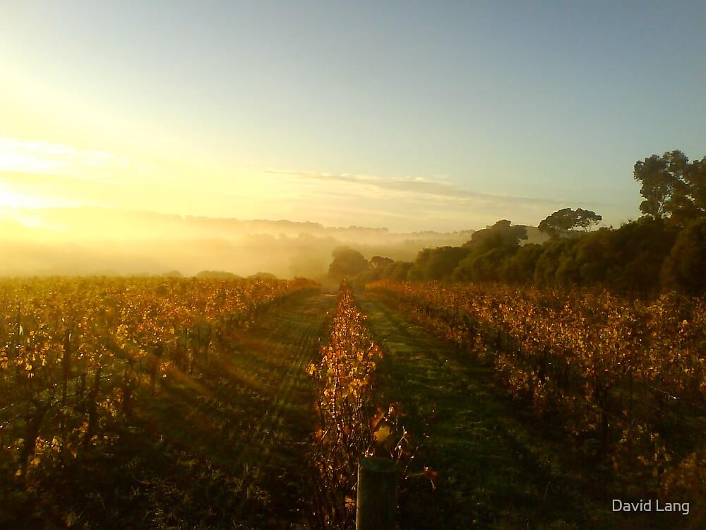 Vineyard at Sunrise by David Lang