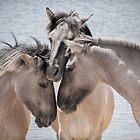 Wild Horses by Henri Ton