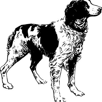 brittany spaniel drawing by marasdaughter